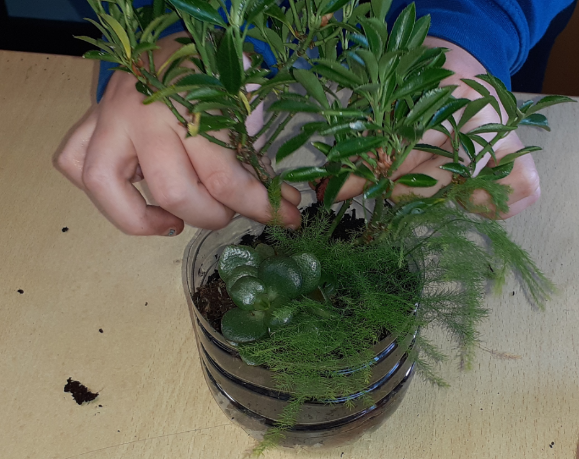 Y5 Rainforest biomes